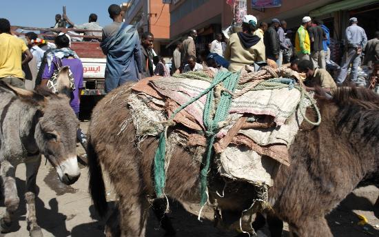 Merkato: Donkeys in the Mercato - Main market area of Addis Ababa