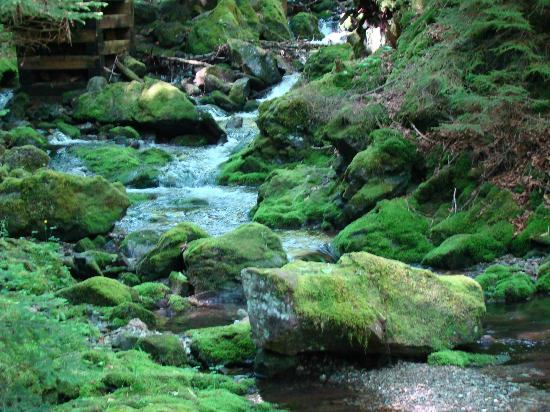 Άλμα, Καναδάς: Dickenson Falls Hike