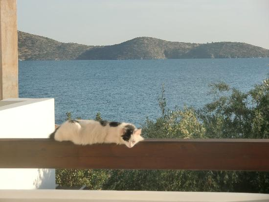 Aquila Elounda Village Hotel: partage de la terrasse de la chambre avec ami de passage...