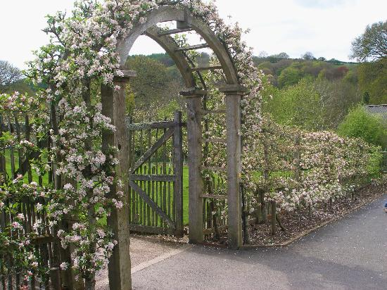 RHS Garden Rosemoor: fruit trees carefully trained over the arch
