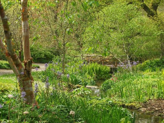 RHS Garden Rosemoor: near the lake