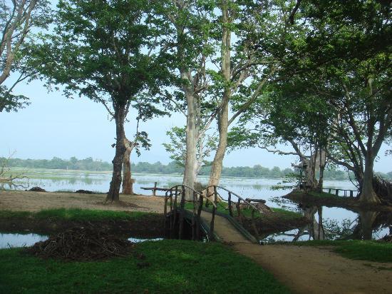 Cinnamon Lodge Habarana : Lakeside