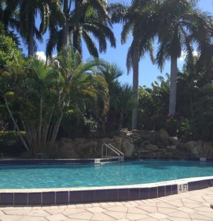 رينيسانس بوكا راتون هوتل: pool 