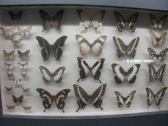 Musée royal de l'Afrique centrale : Butterfly collection/Insect section