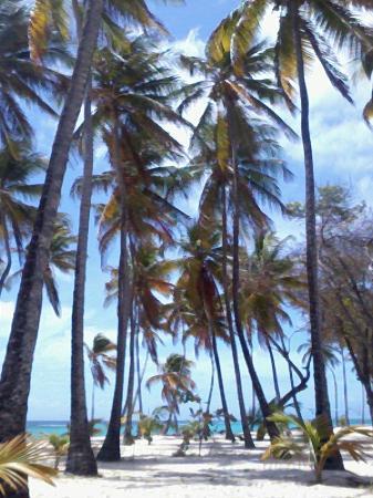 Le Soleil Levant Resort & SPA: la belle plage de la feuillère