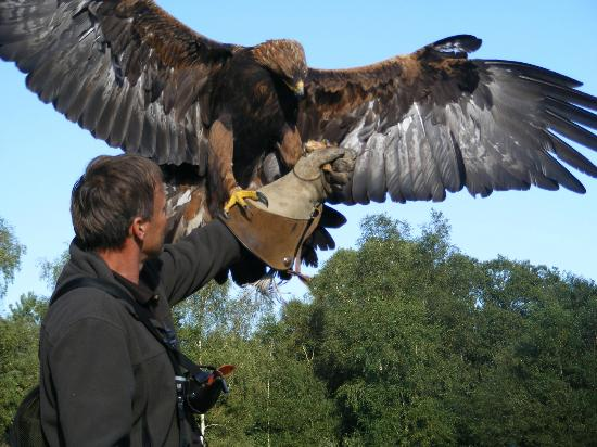Forest Falconry