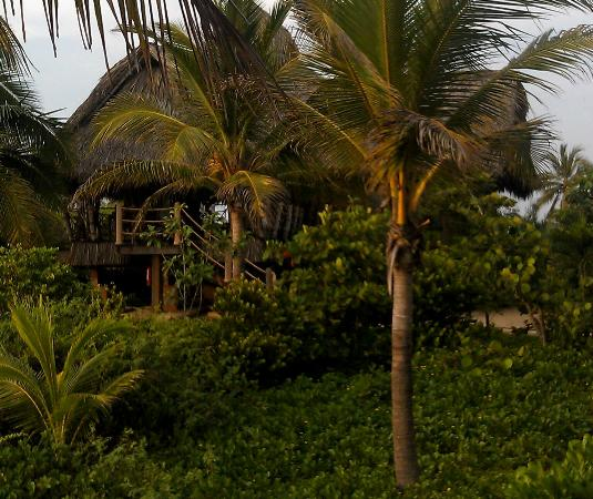 Playa Viva: Number 1