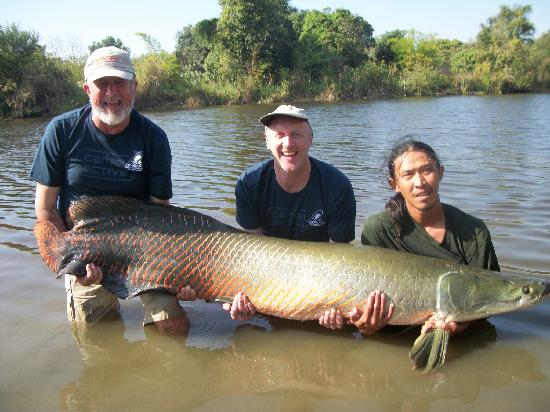Greenfield Valley Fishing & Cottage Resort: Arapaima