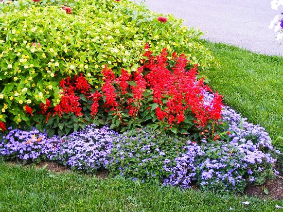 Burlington, Canada: Beautiful flowers in Hendrie Park