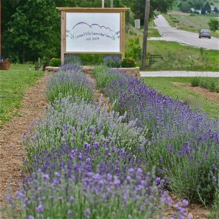 Missouri Valley, Iowa: Major Bloom, Mid June to Mid July