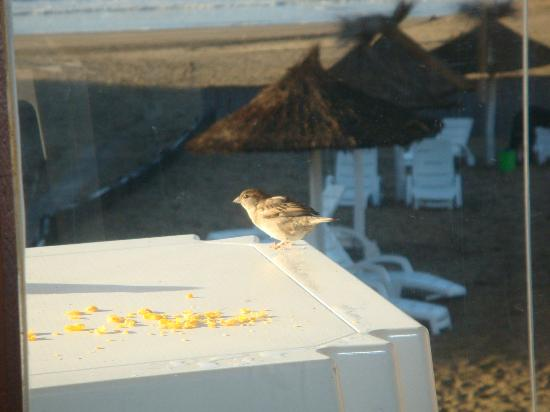 Carilo Soleil: Balcon del departamento, todas las mañanas teniamos visitas que comian los restos del desayuno.