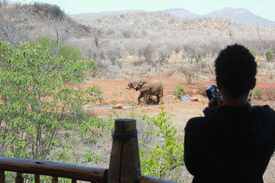 Etali Safari Lodge: water for elephants