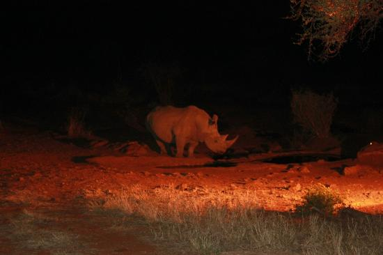 Etali Safari Lodge: Rhino visiting the watering hole outside the lodge