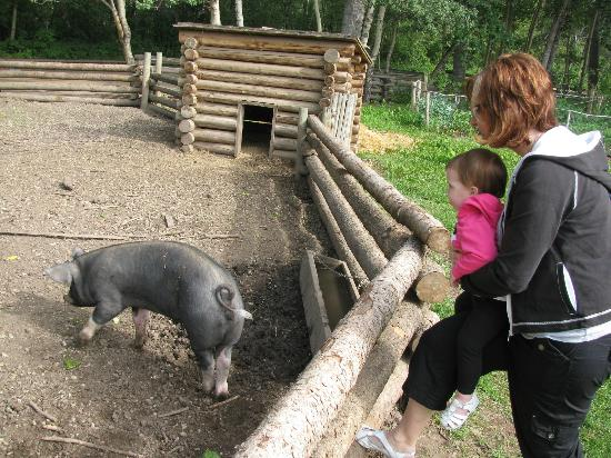 The Pig Pen At The Ottewell Farm In Fort Edmonton Park