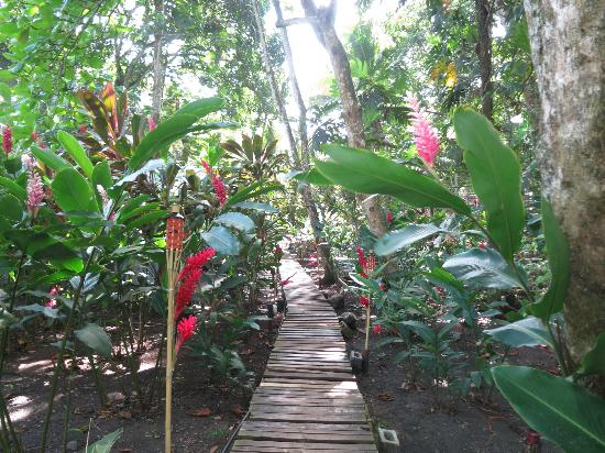 Camarona Caribbean Lodge: Weg durch den Garten zum Strand