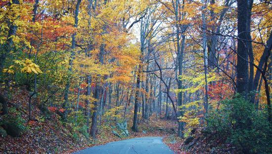 فيرواي فورست ريزورت: Fall in Sapphire 