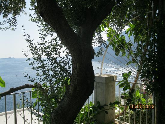 La Maliosa d'Arienzo: Uno de los olivos en nuestro jardin