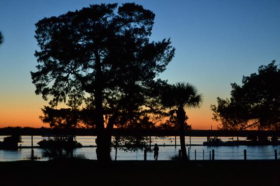 Jekyll Island Campground: West side