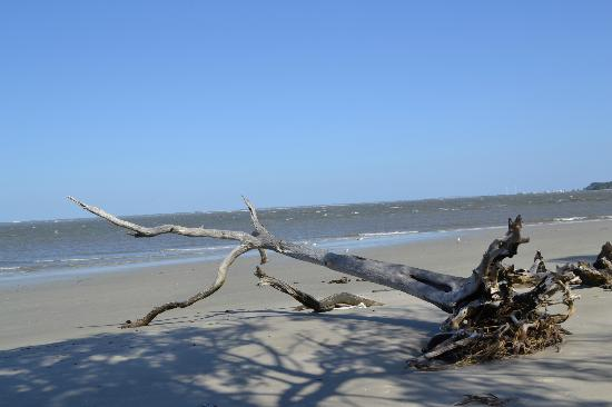 Jekyll Island Campground : East side