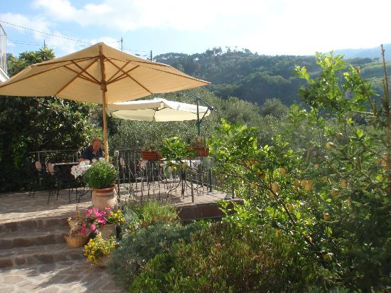 Le Giare: The terrace surrounded by citrus trees