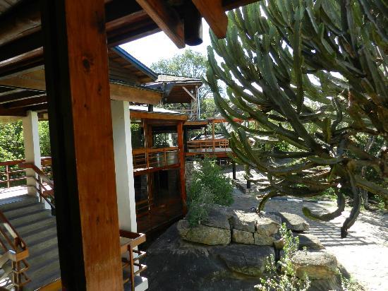 Lobo Wildlife Lodge : vue de l'entrée du restaurant