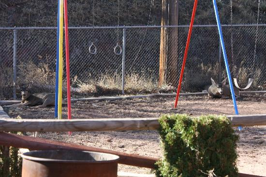 El Colorado Lodge: Deer on the playground :)