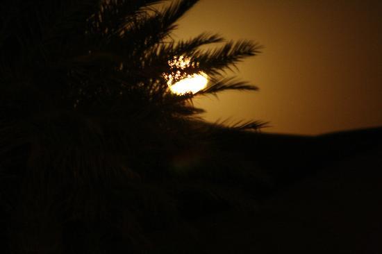 Hotel Kasbah Kanz Erremal: la luna llena a través de una palmera desde la terraza, increible