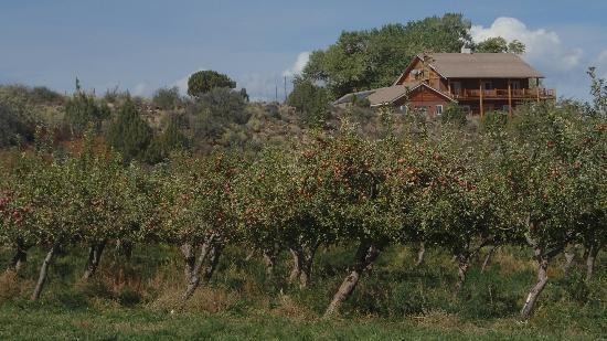Notom Ranch Bed & Breakfast: Just to the right of the apple orchard on the top of the hill