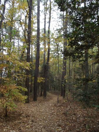 Jordan Lake State Recreation Area: A walking trail