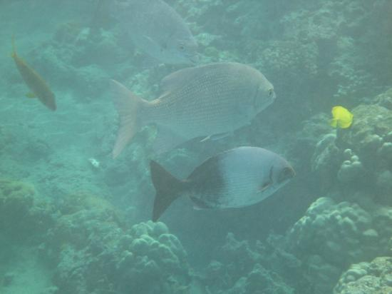 Maui Sands: even the fish are smiling in Maui!