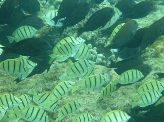 Maui Sands: Tangs