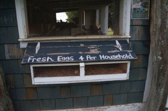 Puakea Ranch: Fresh eggs every morning. We took our eggs and left our vegetable scraps - a fair exchange.