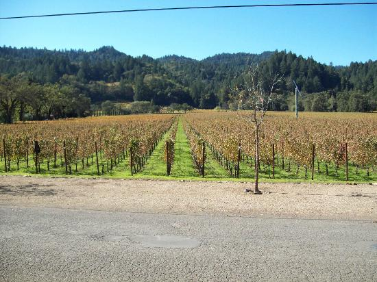 Ehlers Estate Winery: The View of the Vineyard looking back toward the highway