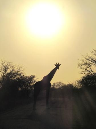 Jock Safari Lodge : Just love Kruger!