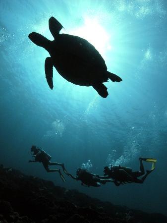 Manta dive gili trawangan 2018 all you need to know before you go with photos tripadvisor - Manta dive gili ...