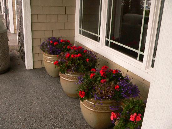 Hotel Bellwether: potted plants on patio