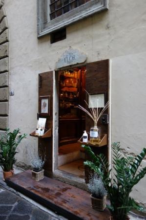 Flor Firenze