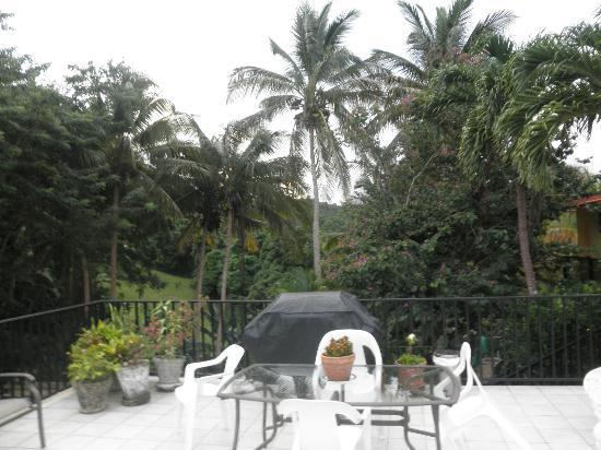 Ceiba Country Inn: Lovely outdoor area