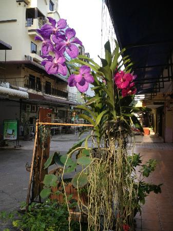 Aquarius Gay Guesthouse and Sauna: Beautifull flowers on the streetside