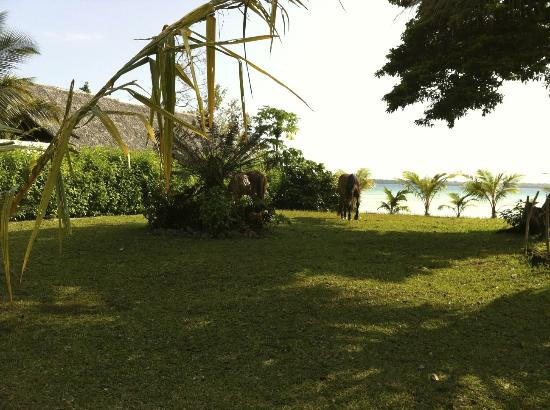Lope Lope Lodge: The horses grazing on the grounds