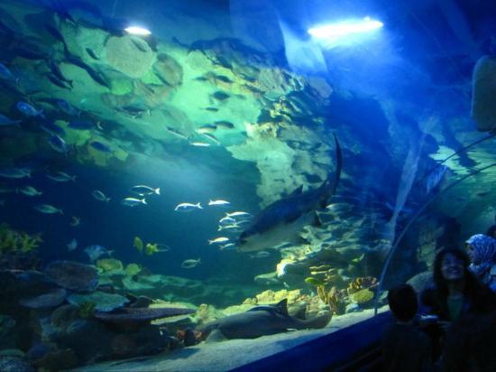 Turkuazoo - Picture of Istanbul Sea Life Aquarium ...