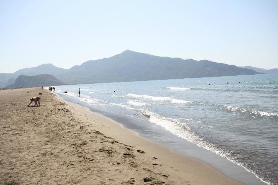 Hotel Calypso Plus: Turtle Beach
