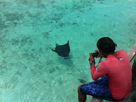 Club Med Kani: The Eagle Ray, marine life at its best