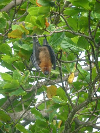 Constance Ephelia: fruit bats