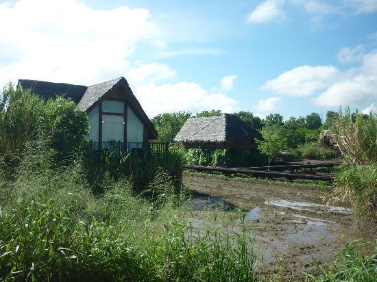 Jetwing Vil Uyana: Muddy Villas