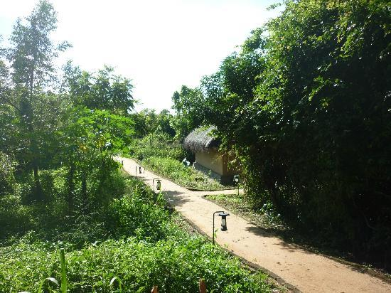 Jetwing Vil Uyana: Path way to the Forest villas