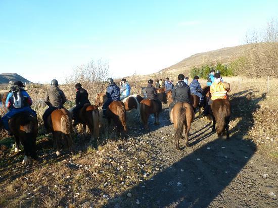 Laxnes Horse Farm: ff pauzeren