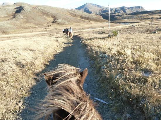 Laxnes Horse Farm: prachtig toch
