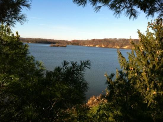Cowan Lake State Park: view from a tree with a geocache.
