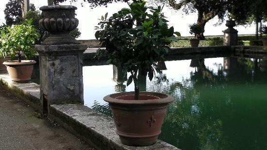 Citronnier en pot au bord d 39 un bassin foto di villa d for S occuper d un citronnier en pot